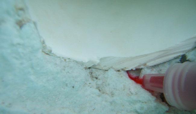 Pool Services Underwater Leak Repairs Pool Dye Testing